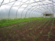 polytunnel-action
