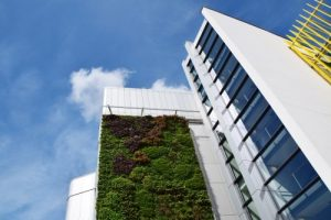 green wall on building