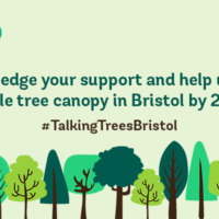 New ambitious target launched to double city tree canopy cover by 2050