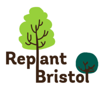 Bristol aims to plant 250,000 trees by 2030 in biggest ever campaign