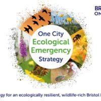 Bristol publishes roadmap for tackling ecological emergency